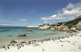 South Africa, Cape Town, penguin colony on beach