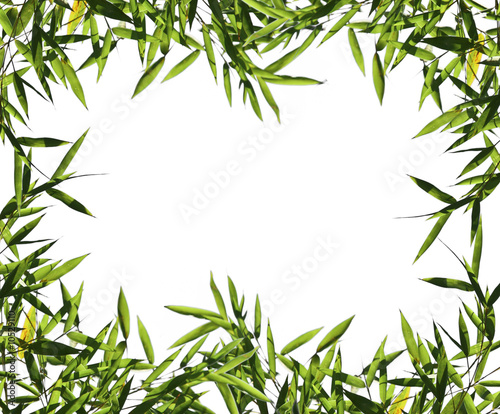 Papiers peints Bambou fine image of bamboo leaf background with space for text