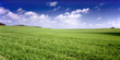 Russia summer landscape - green fileds, the blue sky .