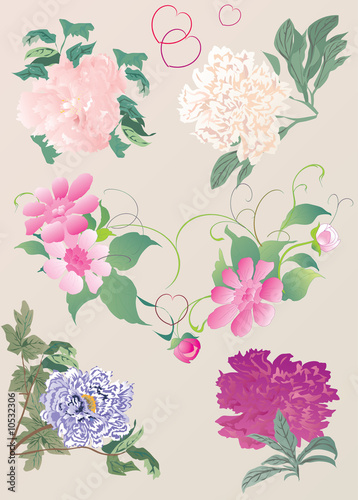 paeon flowers illustration