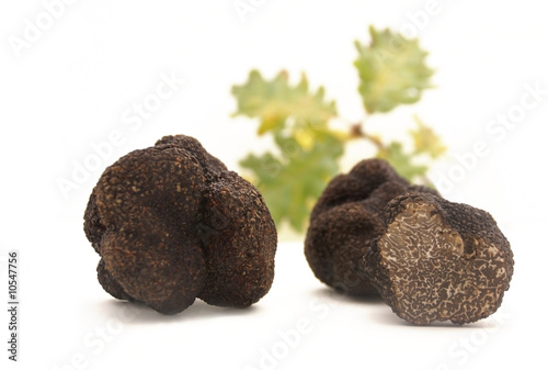 Truffes et chêne blanc - 10547756