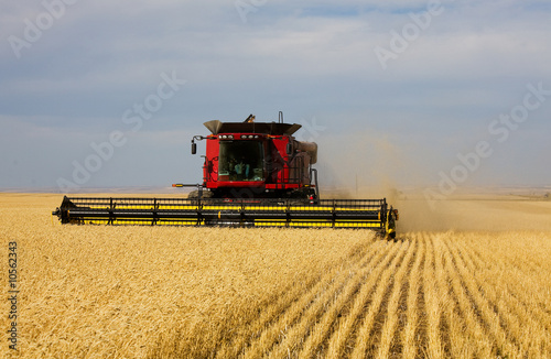 A farmer combining his field of wheat.