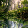 roleta: morning in forest