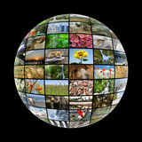 media ball with images on nature poster
