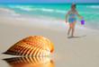 Lone Seashell on Beach