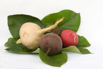 Redish, beetroot, and turnip on leaves