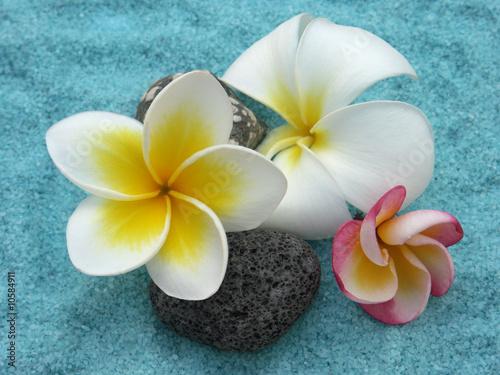 Papiers peints Frangipanni trois variétés différentes de fleurs de frangipaniers