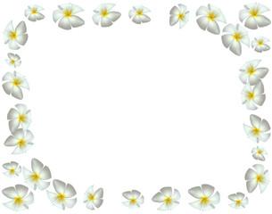 cadre avec des fleurs blanches de frangipanier