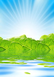 Fresh greenery with rays of sun rising over blue sky. poster