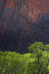 Green trees, red cliffs