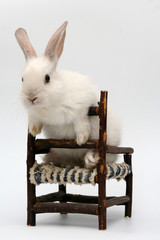 bunny ib a chair