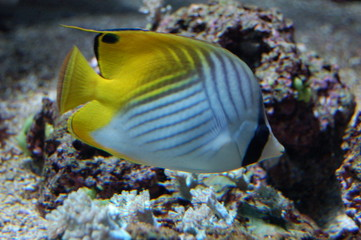 poisson tropical
