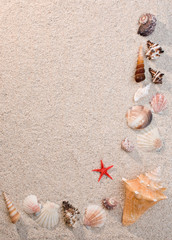 Frame of sea shells and starfish on sand