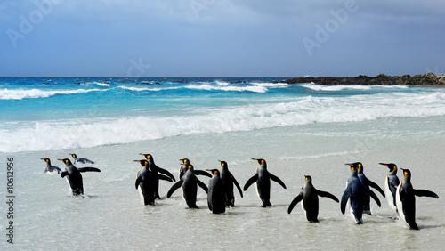 Papiers peints Pingouin King Penguins