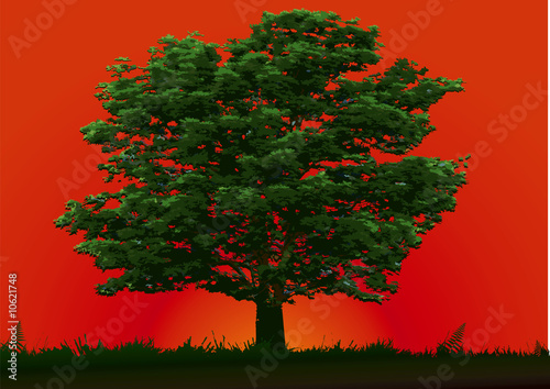 Tree and red sunset
