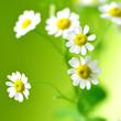 sommer, sonne, kleine blümchen