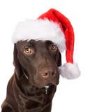 Santa Doggy poster