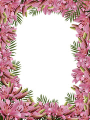 Framework from flowers of a natural pink  lily