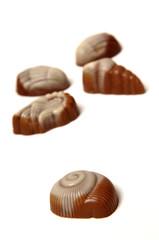 sea shell chocolate