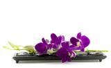 Fototapety Beautiful purple orchid