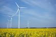 Windkraft und Rapsfelder