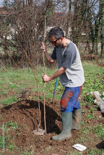 Farmer Planting Fruit Tree
