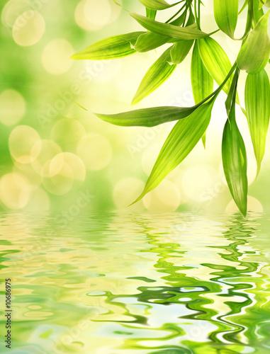 Leinwandbild Motiv Bamboo leaves reflected in rendered water