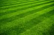 Pelouse fraichement  tondue - 10687104