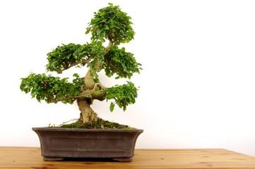 bonzai zen
