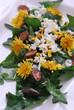 Insalata verde e gialla - tarassaco - Cucina alle erbe e fiori