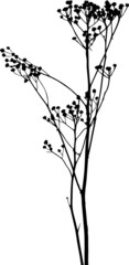 Vector plants silhouettes