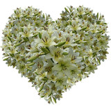 Gentle heart from petals of a white lily poster