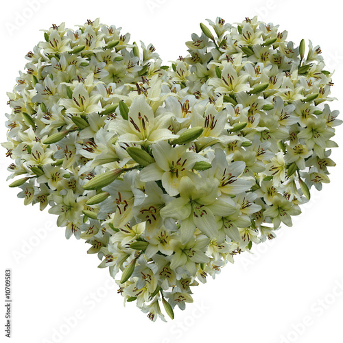 Gentle heart from petals of a white lily