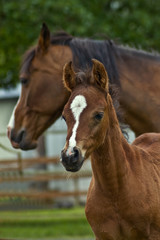 Mother horse and her baby foal
