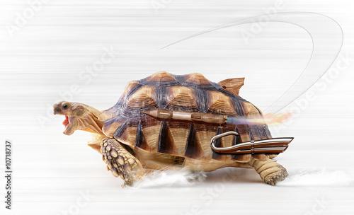 Tuinposter Schildpad fast turtle