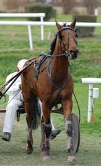 cheval de trot