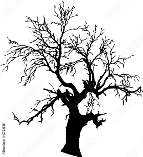 tree vector silhouettes - 10723538