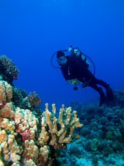 Diver with Lighted Reef