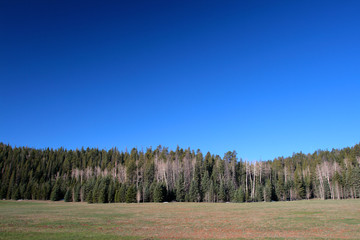 Kaibab National Forest, Arizona, USA..