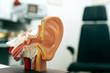 Leinwandbild Motiv Arztpraxis, Ohrenarzt, Ohr