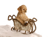 cocker spaniel puppy sitting in winter sleigh poster