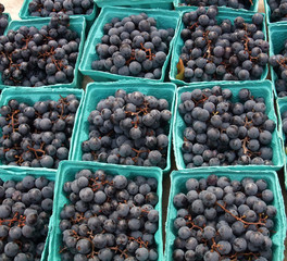 Boxes of Organic Deep Red Concord Grapes