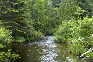 petite rivière à la campagne