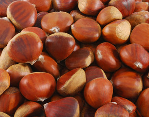 Chestnut closeup