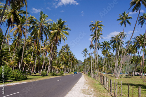 Road through coconut plantation, Moorea, French Polynesia