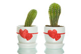 Two cactuses in flowerpots with heart shapes