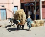 Âne porteur de paille au Maroc