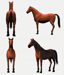 cavalli modelli 1