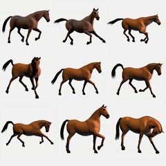 cavalli modelli 2