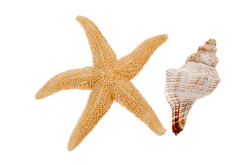 Close-up of seashell and starfish isolated on white background